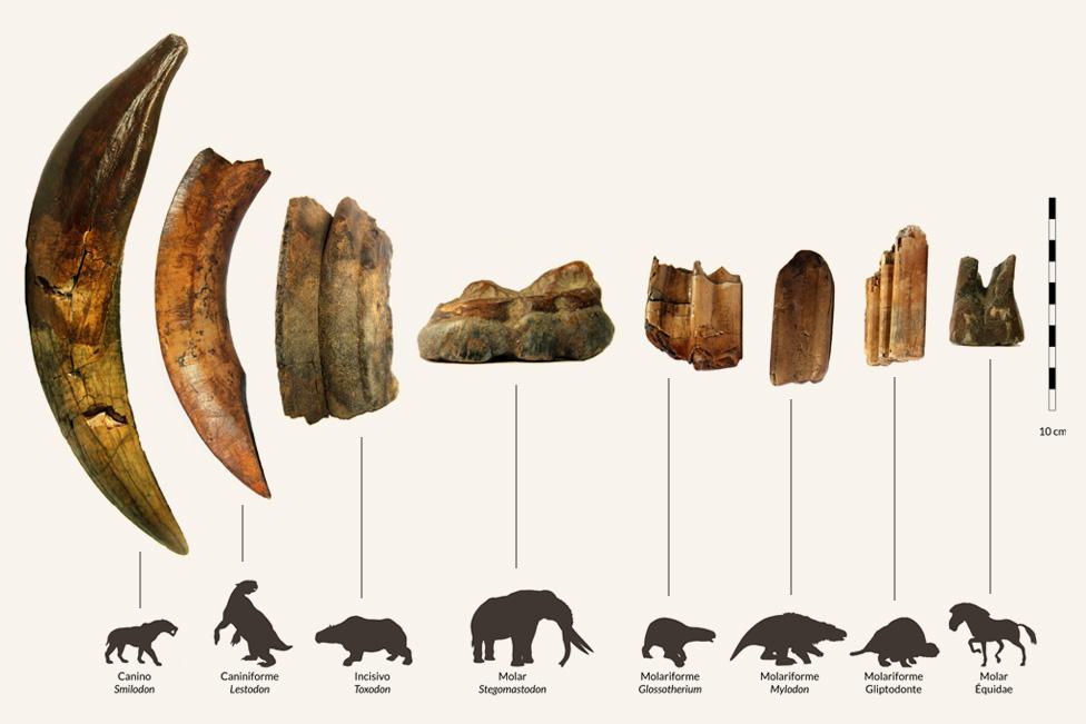 dientes fósiles